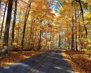 Chapin-Forest-Reservation-drive-through-fall-298x241-Courtney-Kempert